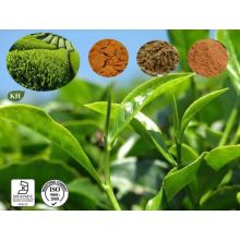 Green Tea Leaf Extract 10: 1 Powder