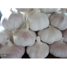 Verduras frescas de ajo chino con color blanco normal