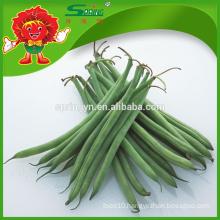 fresh String bean green beans fresh vegetables