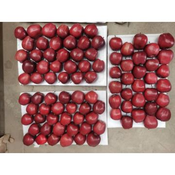 Red Delicious Apple Mejor