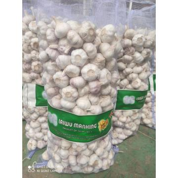 2020 New Crop Super Quality Knoblauch