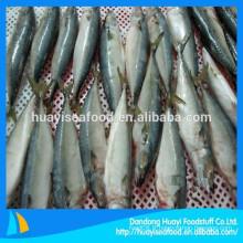 Vente de poisson au maquereau frais congelé en Chine