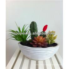 2014 en gros plantes artificielles cactus mini cactus