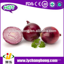 Fresh Onion for Middle East Market