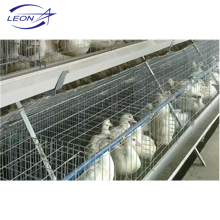 Leon series layer cage for meat duck