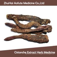 Venta caliente Natural Cistanche extracto Hierba Medicina