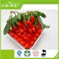 Las bayas frescas de goji exportan Kenia