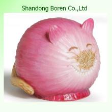 Onion High Quality 100% Mature