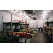 Kühlraum-Kühlraum für das Blumen-Pflanzen