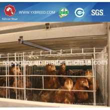 Egg Laying Chicken Cage for Sale