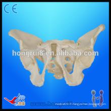 Taille de la vie Modèle de squelette du pélvis pour adultes Modèle de pélvis pour homme médical