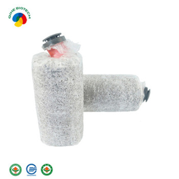 Massenproduktion Hot Sale Bio Oyster Mushroom Spawn