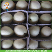 Chinese Fruit Hebei High Quality New Crop Fresh Ya Pear