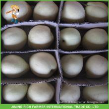 Fruta chinesa Hebei alta qualidade New Crop Fresh Ya Pear