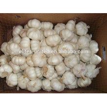 Fresh Garlic From Natural Farms