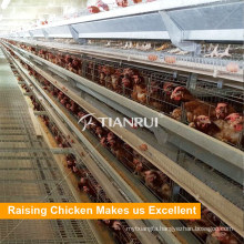 Tianrui Poultry Farm Equipment A Frame Chiken Cage