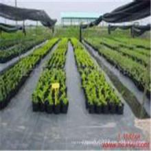 Tissu non-tissé noir tissé de la barrière PP de mauvaise herbe de 100GSM pour l'agriculture