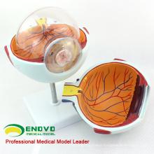 EYE01(12525) Enlarge 6x Life-size Plastic Human Eye Model Anatomy in 6-parts for School Education