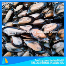 fresh frozen half shell mussel with excellent price