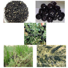 Baya de goji negra certificada Gojivberry de Midlar