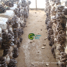 Best Quality/Price Frozen Baby Oyster Mushroom