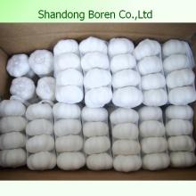 Supple & Export Pure White & Normal Fresh Garlic