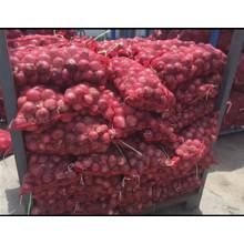 Exportation d'oignons frais / légumes / à haute qualité
