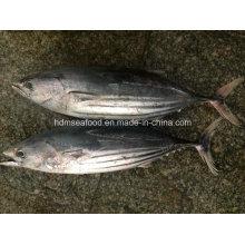 Замороженная рыба в виде круглой рыбы