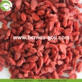 Factory Supply Fruits Nutrition Kaufen Goji Beere