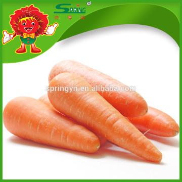 2016 nueva zanahoria roja china fresca