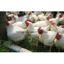 Las aves de corral de alambre malla de alambre Hexagonal/acoplamiento