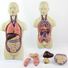 Анатомия TUNK 12012 мини 12 частей 45 см Бесполого торс куклы человеческих органов модель