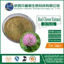 8.0% Isoflavones totales Extrait de trèfle rouge