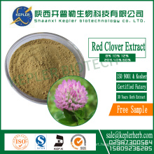 8.0% Total Isoflavones Red clover extract
