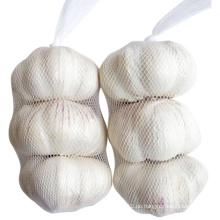 Frische Kleine Tasche Verpackung Pure White Knoblauch