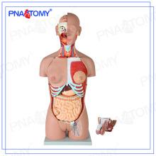 PNT-0301 85cm 28 pièces torse humain modèle, dos ouvert, double sexe