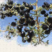 Mispel hohe Qualität Ningxia schwarze Goji Beere