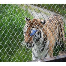 Оцинкованные зоопарк, фехтование сетки (TS-J79)