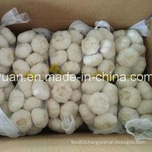 2016 Chinese New Crop Pure White Garlic