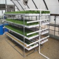 Hydroponisches Futter ProFeed Growing System