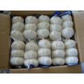 Chinese Good Quality Pure White Garlic