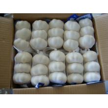 Exportation Nouvelle Ail blanc pur frais de récolte