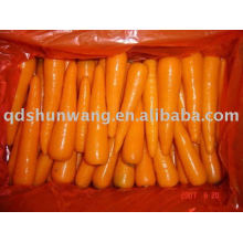 2015 Chinese good qualityred carrots in good taste
