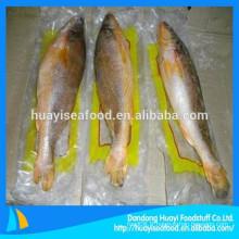 Forte demande du marché étranger pour le croaker jaune gelé