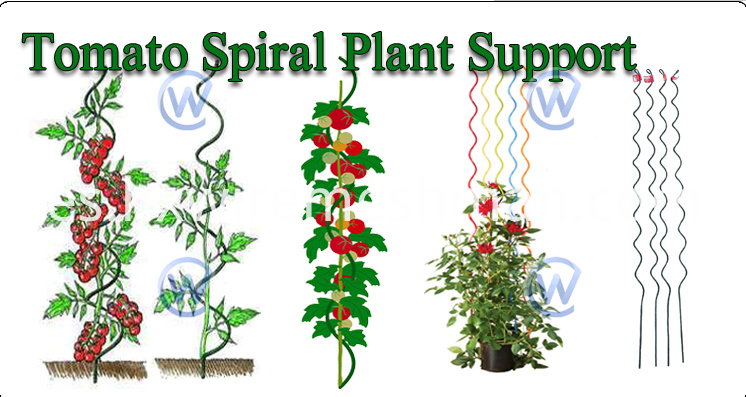 tomato spiral plant support