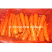 New Fresh Carrot (S M L 2L 3L)
