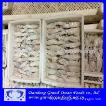 Block frozen baby squid-loligo