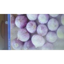 2015 New Crop Fresh Garlic