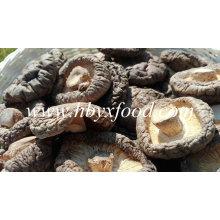 Seta de shiitake lisa secada con buen paquete