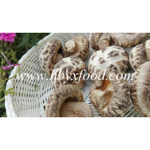 Champignons de fleurs séchées, Chine Champignons de shiitake, aliments sains